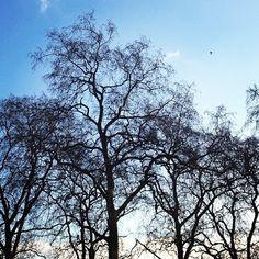 Green Park blue sky