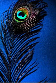 Peacock Eye-Feather