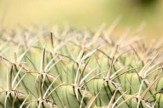 Abstract Prickly cactus, fine art photography by Terry Fleckney. Those really do look prickly and painful.