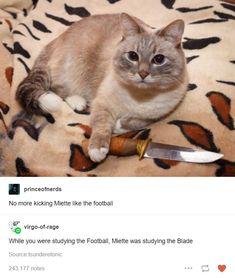 Cute Funny Animals, Funny Cute, Cute Cats, Hilarious, Stupid Funny Memes, Funny Stuff, Animal Memes, Cat Memes, Tumblr Funny