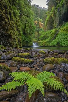 Eagle Creek - Colombia River Gorge, Oregon