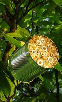 Ein Insektenhotel kannst du auch ganz einfach aus einer Konservendose bauen. Wir erklären, wie es geht.
