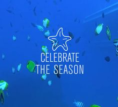 Celebrate the season and save!   Making spirits bright and blue with $20 off select submarine dives at all locations now through December 15. Book your underwater adventure today! http://ift.tt/2fYiIIy
