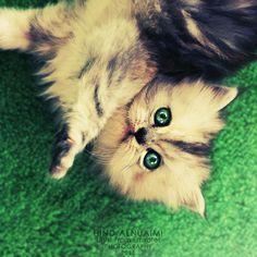 #cats #kitty
