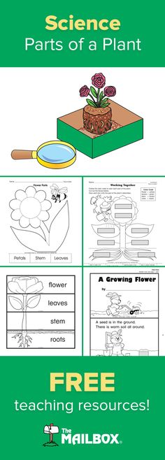 Find these plant-related activities, worksheets, and investigations for your science unit as well as cross-curricular plant-themed teaching resources at themailbox.com. FREE!