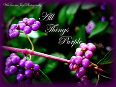 Wholesome Joy Photography: All Things Purple!