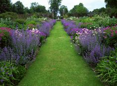 Great border and grass path to put between vegetable garden and flower/tree garden