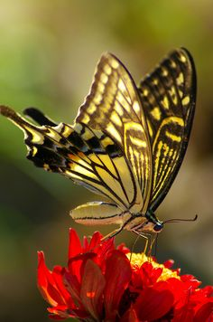 I have got to get to a Butterfly garden so I can start taking cool pictures like this myself
