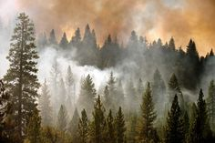 Smoke rises from a spot fire off Highway 120 as the Rim Fire burns near Groveland, Calif. The fire has threatened large portions of Yosemite National Park and burned an area the size of Chicago.