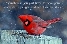 Cardinal in the Snow PDF Cross Stitch Pattern Happy Winter Solstice, Cardinal Birds, How To Attract Birds, Spiritual Inspiration, Faith In God, Counted Cross Stitch Patterns, Cardinals, Beautiful Birds, Animals