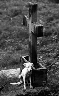 A skinny little dog living in a cemetery in cuba.  the only food it gets is scraps from a restaurant across a busy street.  One stray has already been hit and killed.  It's probably not long before this one goes too.