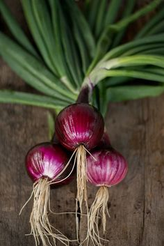 SOUTHPORT RED GLOBE ONION (HEIRLOOM, 110 DAYS)
