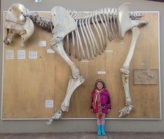 Elephant, skeleton   Flickr - Photo Sharing!