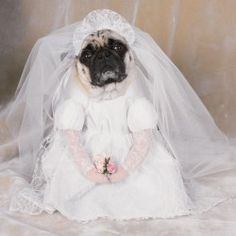 Bride Wedding Pet Dog Costume