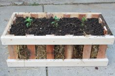 A simple crate planter made from pallets and using a straw bale for a growing medium