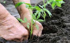 Agricoltura sociale: finalmente è legge! #ciboprossimo
