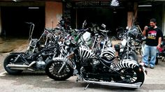 Now and then, it is normal for this zebra stripe bobber to get a new admirer.