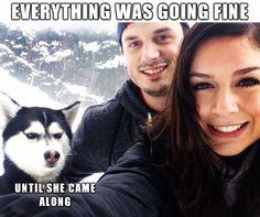 Best of jealous Husky meme - CLICK TO SEE MORE! http://roflburger.com
