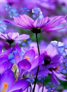 Прекрасного утра вам друзья Пусть жизнь дарит вам людей, подобных цветам — искренних, ярких, открытых солнцу.