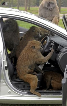 We definitely do not let baboons park your car! Visit our website to find out about our services ... abcgatwick.co.uk