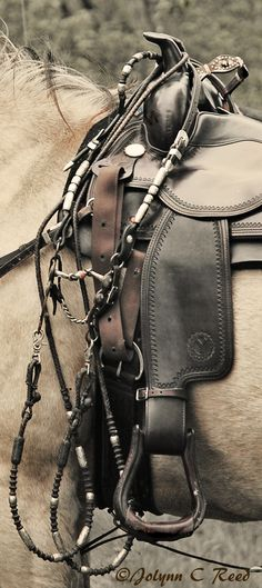 Beautiful gear...especially like the simplicity of the saddle.