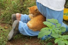 Little gardening helper