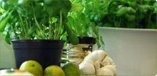 #herbs #cooking #kueche #krauter #gewuerze #spice Küchenkräuter & Gewürze. Fresh kitchen herbs for modern cooking