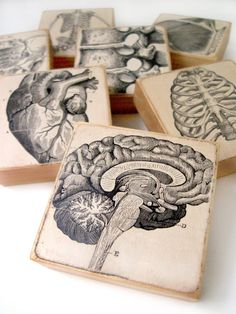 Anatomy art blocks...or coasters?! Doesn't matter, love 'em. Must have.