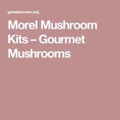 Morel Mushroom Kits – Gourmet Mushrooms