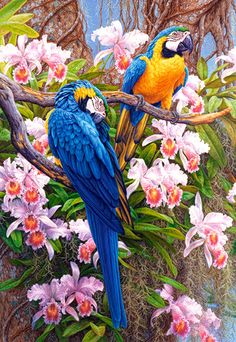 diy diamond painting cross stitch Parrot and flower diamond embroidery animals round diamond Mosaic home decor picture pastes Tropical Art, Tropical Birds, Exotic Birds, Colorful Birds, Amazon Birds, Parrot Drawing, Parrot Painting, 5d Diamond Painting, Diamond Drawing