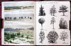 Nina Johansson. Pen and watercolors. The three different sketches on the left clearly show three different types of trees and vegetation. Trees are one of the most common elements in landscape sketches and drawings. Through studying the habitus (canopy shape), texture and color of different tree species, we can add more information to the drawing by making different tree species clearly recognisable.