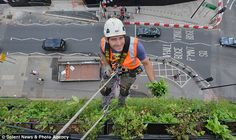 Mail-On-Line. Aug. 2013. Climbing up the walls: Country's largest 'vertical garden' unveiled which experts say will prevent central London from flooding