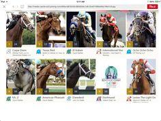 Derby 2015 Contenders Carpe Diem, Preakness Stakes, Derby Horse, Triple Crown Winners, American Pharoah, Run For The Roses, Texas, Sport Of Kings, Racehorse