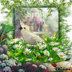 Blossoms of spring  ☼  Blütenpracht des Frühlings