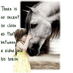 Horse Quote Edits - Smokey Hallow Stables   ...........click here to find out more     http://googydog.com