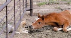 hello! Aww how sweet is this picture, it makes you wonder what both the foal and the dog were thinking, so cute✨✨