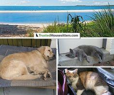 #pets, sea and the beach #housesitting Australia style