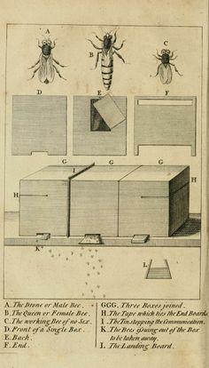 Ducarne de Blangy | Traité de l'education économique des abeilles, où se trouve aussi leur histoire naturelle: Avec figures (1771)