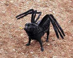Funny Costumes Ideas Funny Costume ideas - funny dog Black spider costume so funny & The 9 best Spider Dogs. images on Pinterest | Animal costumes Pet ...