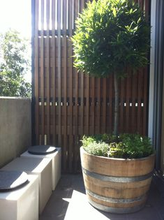 Herb Garden in Oak wine barrel with 'Bay Leaf' standard - Greenline Garden Design, Gardeners, Surry Hills, NSW, 2010 - TrueLocal Barrel Garden Ideas, Barrel Garden Planters, Wine Barrel Garden, Wine Barrel Planter, Backyard Garden Landscape, Small Backyard Gardens, Small Space Gardening, Gardening Tips, Gravel Garden