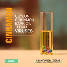 Looks at research studies on  using Ceylon Cinnamon Bark Oil used to kill deadly viruses