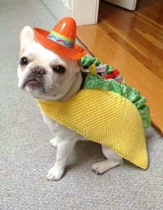 Nacho says: I don't want to taco bout what I did for cinco de mayo, it's nacho business!!