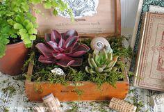 DIY Cigar Box Planters with Succulents