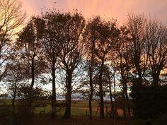 West Backhill of Lethenty: Garden at Sunset | by blazing fruit