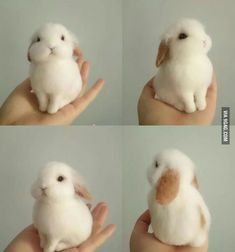 Bunny perfection #CutestBabyAnimals