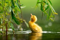 The Finalists of the Bird Photographer of the Year 2021 Are Announced Photography Contests, Photography Awards, Nature Photography, Stunning Photography, Photography Ideas, National Geographic, Rockhopper Penguin, Grey Heron, Mute Swan