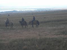 """Summer Special """"HORSEBACK RIDES"""" for donations here at Rocky Acres Rescue in Townsend, Montana ....Lets go for a ride!  www. rockyacreshorserescue .org"""
