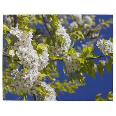 Flowering Pear Tree Puzzle