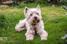 archie.jpg by davidabbs. Please Like http://fb.me/go4photos and Follow @go4fotos Thank You. :-)