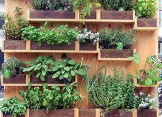 Pared verde (jardines urbanos)